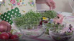 Around the Farm Table-Maple Syrup and Microgreens