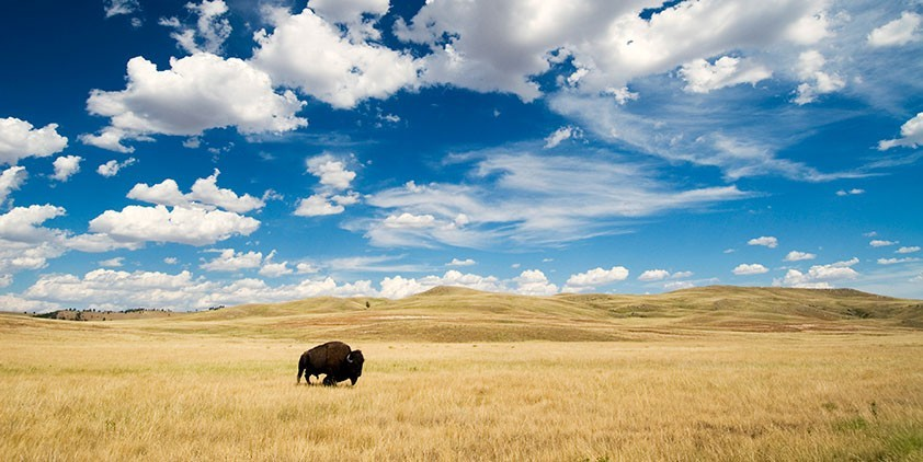 great plains america s lingering wild wisconsin public television