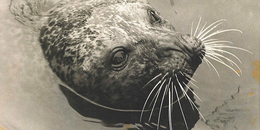 The Seal Who Came Home