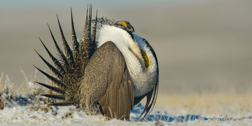 Nature-The Sagebrush Sea